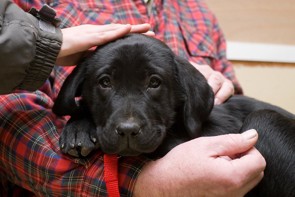 3 Important Factors You Must Take Care Before Buying Your First Puppy