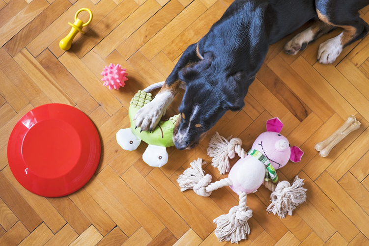 How to Choose the Best Pet Toys for Your Fur Baby!!